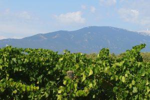 Vue Mont Ventoux