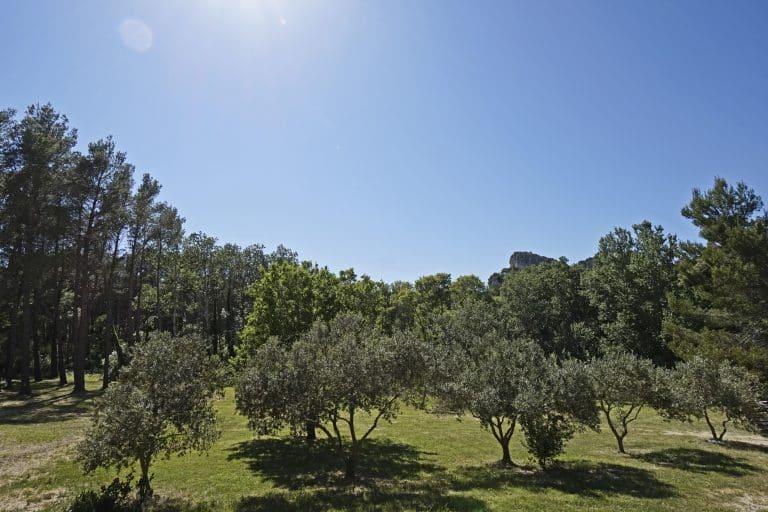 location saisonnière provence alpilles